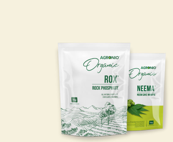 Rock phosphate and organic neem cake fertilizers
